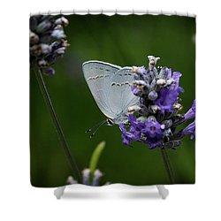 California Hairstreak Butterfly Shower Curtain