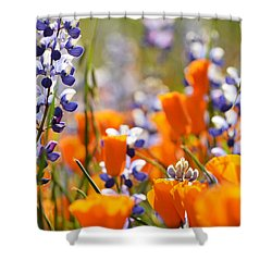 California Poppies And Lupine Shower Curtain by Kyle Hanson