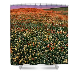Shower Curtain featuring the photograph California Poppies At Dawn Lancaster California by Dave Welling