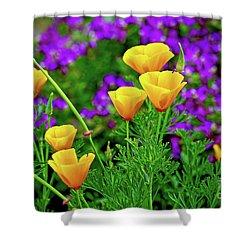 California Poppies Shower Curtain by Michael Cinnamond