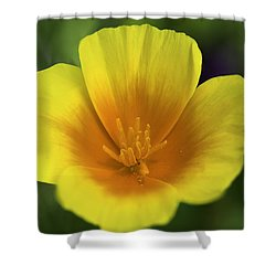 California Poppy 2 Shower Curtain