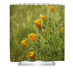 California Poppy Shower Curtain by Doug Herr