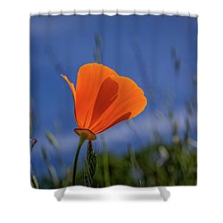 California Poppy Shower Curtain by Marc Crumpler