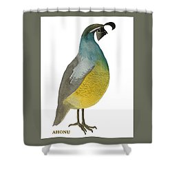 California Quail Posing Shower Curtain