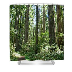 California Redwood Trees Forest Art Prints Shower Curtain by Baslee Troutman