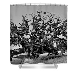 California Roadside Tree - Black And White Shower Curtain by Matt Harang