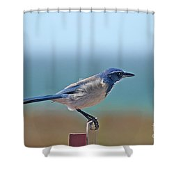 California Scrub Jay Shower Curtain