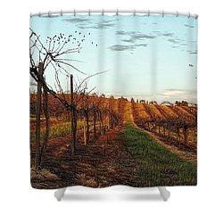California Vineyard In Winter Shower Curtain