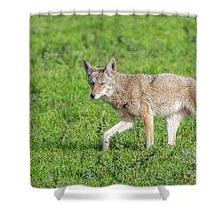 California Walk  Shower Curtain