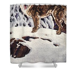 Call Of The Wild, 1903 Shower Curtain by Granger