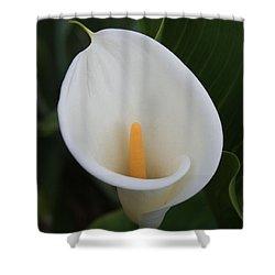 Perfect White Calla  Shower Curtain