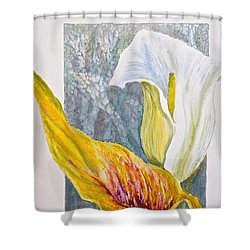 Shower Curtain featuring the painting Calla Lily by Carolyn Rosenberger