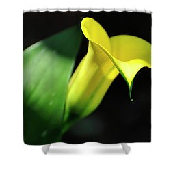 Shower Curtain featuring the photograph Calla Lily Light by Jerry Sodorff