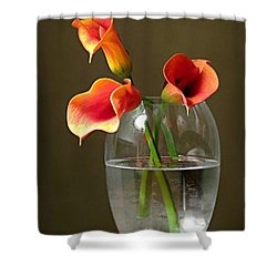 Calla Lily Stems Shower Curtain by Diana Angstadt