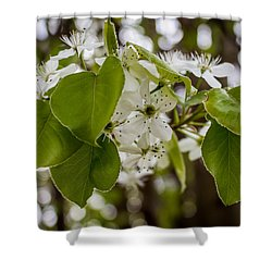 Callery Pear Tree Bloom Shower Curtain