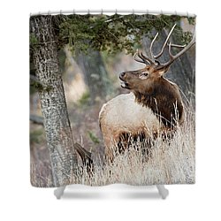 Calling Her Name Shower Curtain