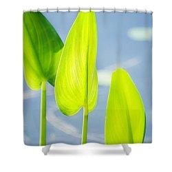 Calm Greens Shower Curtain