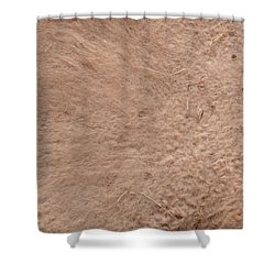 Camel Shower Curtain by Linda Geiger
