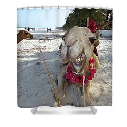 Camel On Beach Kenya Wedding2 Shower Curtain