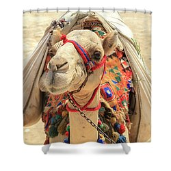 Shower Curtain featuring the photograph Camel by Silvia Bruno