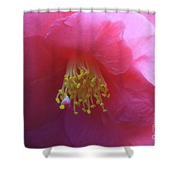 Camellia Japonica Shower Curtain by Louise Heusinkveld
