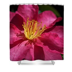 Camellia Sasanqua Shower Curtain