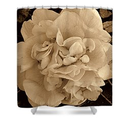 Camellia Sepia Shower Curtain by Susanne Van Hulst