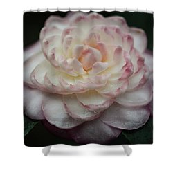 Camellia White And Pink Shower Curtain