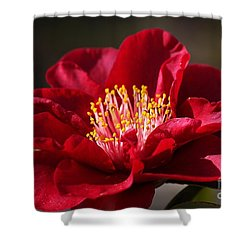 Camellia's In Style Shower Curtain