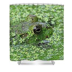 Camo Frog Shower Curtain by Ronda Ryan