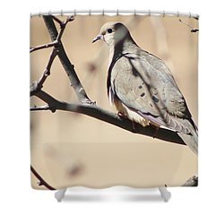 Camouflaged Mourning Dove Shower Curtain