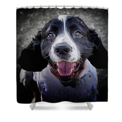 Shower Curtain featuring the photograph Can We Go For A Swim, Can We, Huh, Can We? by Wallaroo Images