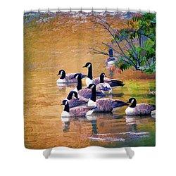 Shower Curtain featuring the photograph Canada Geese - Autumn At Pandapas Pond by Kerri Farley