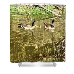 Canada Geese Family Shower Curtain