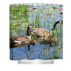 Canada Geese Family On Lily Pond Shower Curtain