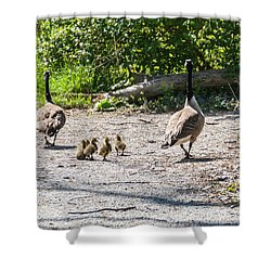 Canada Geese Family Walk Shower Curtain by Edward Peterson