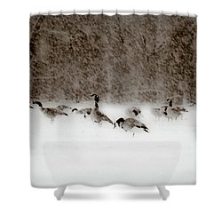 Canada Geese Feeding In Winter Shower Curtain