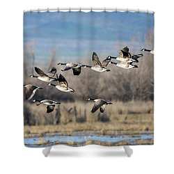 Canada  Geese Flock Shower Curtain by Mike Dawson