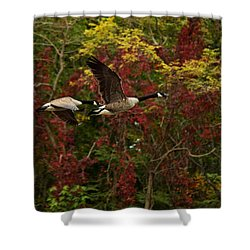 Shower Curtain featuring the photograph Canada Geese In Autumn by Angel Cher