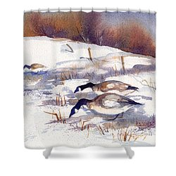 Canada Geese In Stubble Field II Shower Curtain by Peggy Wilson