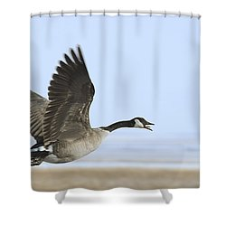 Canada Goose Shower Curtain