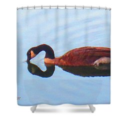 Canada Goose On Clear Lake Shower Curtain