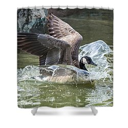Shower Curtain featuring the photograph Canada Goose Plunge by Stephen  Johnson
