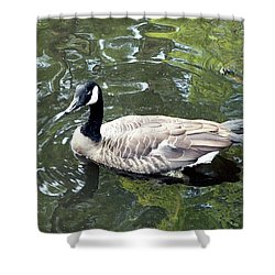 Canada Goose Pose Shower Curtain by Al Powell Photography USA