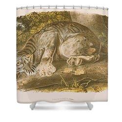 Canada Lynx Shower Curtain by John James Audubon