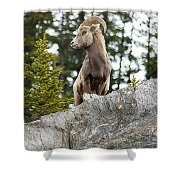 Canadian Bighorn Side Profile Shower Curtain