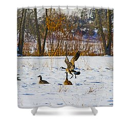 Canadian Geese At Sunrise IIi Shower Curtain