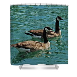 Canadian Geese Shower Curtain by Carol  Eliassen