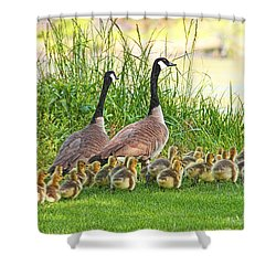 Canadian Geese Family Shower Curtain by Jennie Marie Schell
