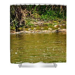 Shower Curtain featuring the photograph Canadian Geese Family by Robert Bales